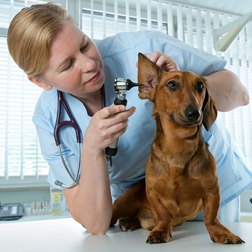 Vet image with a dog - healthcare