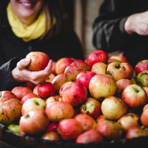Hunt's Cider Apples